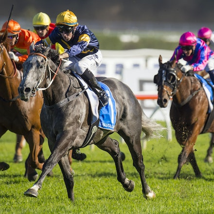 Chautauqua-BerryTommy-04022016-1514_1 - CHAUTAUQUA (Encosta de Lago - Lovely Jubly) wins the G1 TJ Smith Stakes for the 2nd successive year at Royal Randwick...