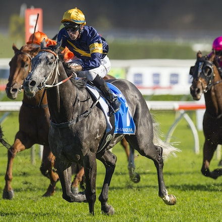 Chautauqua-BerryTommy-04022016-1515 - CHAUTAUQUA (Encosta de Lago - Lovely Jubly) wins the G1 TJ Smith Stakes for the 2nd successive year at Royal Randwick...