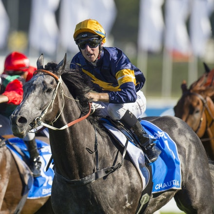 Chautauqua-BerryTommy-04022016-1520 - CHAUTAUQUA (Encosta de Lago - Lovely Jubly) wins the G1 TJ Smith Stakes for the 2nd successive year at Royal Randwick...