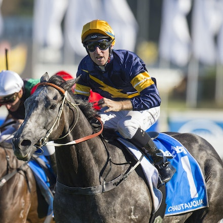 Chautauqua-BerryTommy-04022016-1521 - CHAUTAUQUA (Encosta de Lago - Lovely Jubly) wins the G1 TJ Smith Stakes for the 2nd successive year at Royal Randwick...