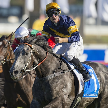 Chautauqua-BerryTommy-04022016-1522 - CHAUTAUQUA (Encosta de Lago - Lovely Jubly) wins the G1 TJ Smith Stakes for the 2nd successive year at Royal Randwick...