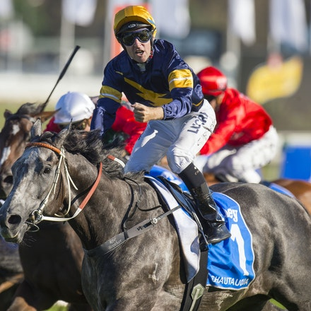 Chautauqua-BerryTommy-04022016-1523_1 - CHAUTAUQUA (Encosta de Lago - Lovely Jubly) wins the G1 TJ Smith Stakes for the 2nd successive year at Royal Randwick...