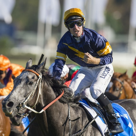 Chautauqua-BerryTommy-04022016-1524 - CHAUTAUQUA (Encosta de Lago - Lovely Jubly) wins the G1 TJ Smith Stakes for the 2nd successive year at Royal Randwick...