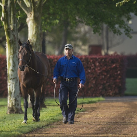 Albrecht-09212015-8324 - ALBRECHT (Redoute's Choice) photographed at Darley's Kelvinside Stud on 21 September 2015.  Picture - Bronwen Healy. The Image...