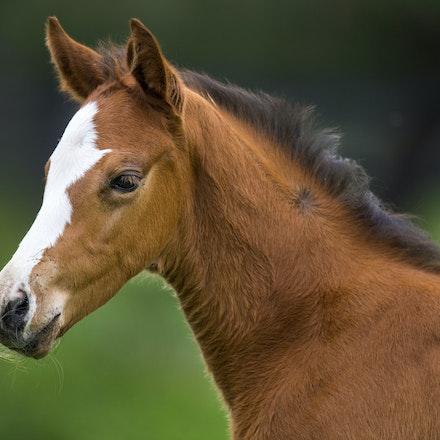Foal Portfolio