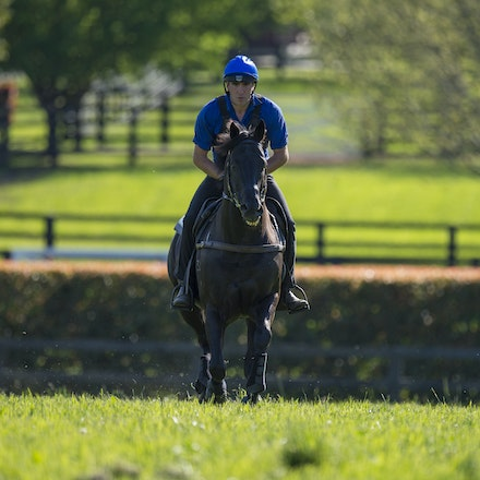 Lonhro-09212015-0434 - Champion stallions EXCEED AND EXCEL (bay stallion) and LONHRO (black stallion) are exercised under saddle at Darley's Kelvinside...