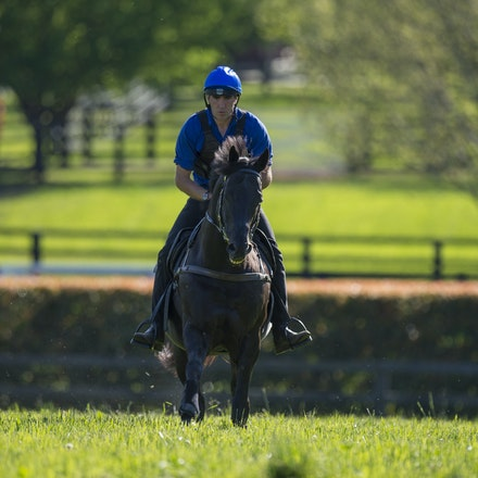Lonhro-09212015-0442 - Champion stallions EXCEED AND EXCEL (bay stallion) and LONHRO (black stallion) are exercised under saddle at Darley's Kelvinside...
