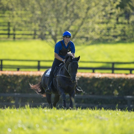 Lonhro-09212015-0503 - Champion stallions EXCEED AND EXCEL (bay stallion) and LONHRO (black stallion) are exercised under saddle at Darley's Kelvinside...