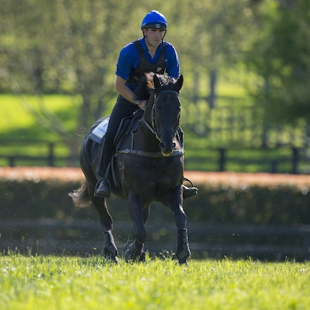 Lonhro-09212015-0515 - Champion stallions EXCEED AND EXCEL (bay stallion) and LONHRO (black stallion) are exercised under saddle at Darley's Kelvinside...