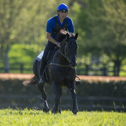 Lonhro-09212015-0521 - Champion stallions EXCEED AND EXCEL (bay stallion) and LONHRO (black stallion) are exercised under saddle at Darley's Kelvinside...