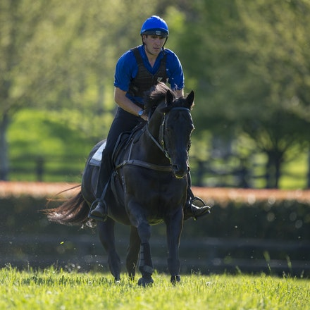 Lonhro-09212015-0522 - Champion stallions EXCEED AND EXCEL (bay stallion) and LONHRO (black stallion) are exercised under saddle at Darley's Kelvinside...