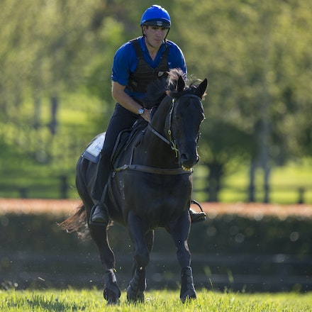 Lonhro-09212015-0527 - Champion stallions EXCEED AND EXCEL (bay stallion) and LONHRO (black stallion) are exercised under saddle at Darley's Kelvinside...