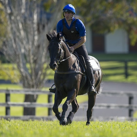 Lonhro-09212015-0589 - Champion stallions EXCEED AND EXCEL (bay stallion) and LONHRO (black stallion) are exercised under saddle at Darley's Kelvinside...