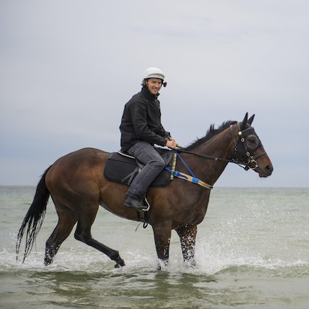 Winx-CaddenBen-10052016-0952 - WINX (Street Cry - Vegas Showgirl) visits the beach on Sunday 9 October 2016 after winning her 12th successive race, the...