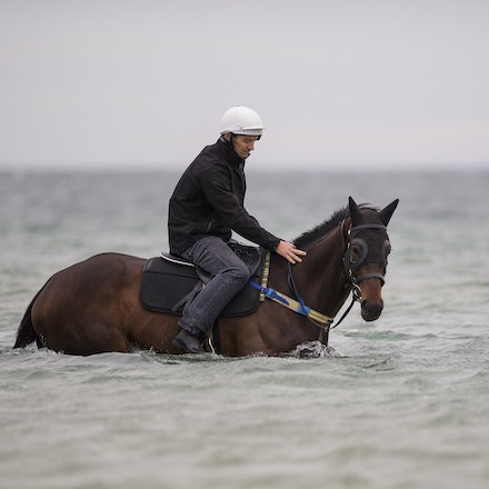 Winx-CaddenBen-10092016-4634 - WINX (Street Cry - Vegas Showgirl) visits the beach on Sunday 9 October 2016 after winning her 12th successive race, the...