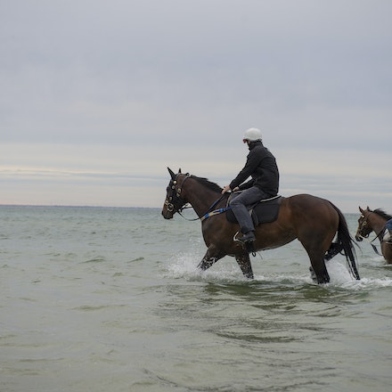 Winx-CaddenBen-10052016-1094 - WINX (Street Cry - Vegas Showgirl) visits the beach on Sunday 9 October 2016 after winning her 12th successive race, the...