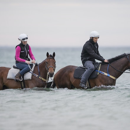 Winx-CaddenBen-10092016-4602 - WINX (Street Cry - Vegas Showgirl) visits the beach on Sunday 9 October 2016 after winning her 12th successive race, the...
