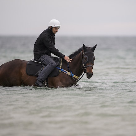 Winx-CaddenBen-10092016-4635 - WINX (Street Cry - Vegas Showgirl) visits the beach on Sunday 9 October 2016 after winning her 12th successive race, the...