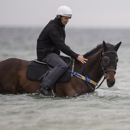 Winx-CaddenBen-10092016-4636 - WINX (Street Cry - Vegas Showgirl) visits the beach on Sunday 9 October 2016 after winning her 12th successive race, the...