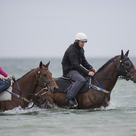 Winx-CaddenBen-10092016-4666 - WINX (Street Cry - Vegas Showgirl) visits the beach on Sunday 9 October 2016 after winning her 12th successive race, the...