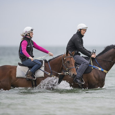 Winx-CaddenBen-10092016-4674 - WINX (Street Cry - Vegas Showgirl) visits the beach on Sunday 9 October 2016 after winning her 12th successive race, the...
