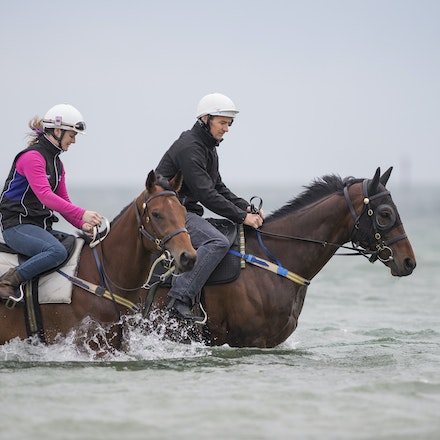 Winx-CaddenBen-10092016-4684 - WINX (Street Cry - Vegas Showgirl) visits the beach on Sunday 9 October 2016 after winning her 12th successive race, the...