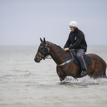 Winx-CaddenBen-10092016-4888 - WINX (Street Cry - Vegas Showgirl) visits the beach on Sunday 9 October 2016 after winning her 12th successive race, the...