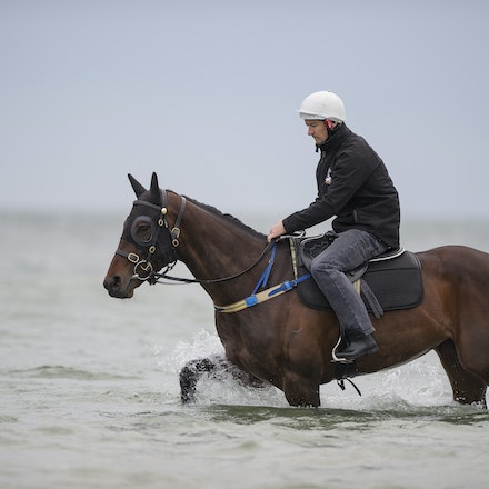 Winx-CaddenBen-10092016-4913 - WINX (Street Cry - Vegas Showgirl) visits the beach on Sunday 9 October 2016 after winning her 12th successive race, the...