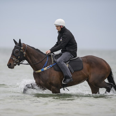 Winx-CaddenBen-10092016-4914 - WINX (Street Cry - Vegas Showgirl) visits the beach on Sunday 9 October 2016 after winning her 12th successive race, the...