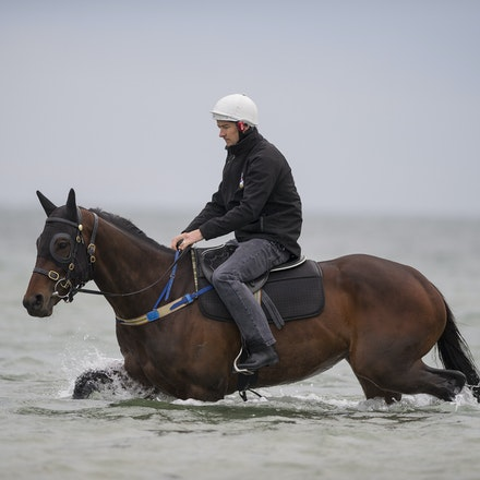 Winx-CaddenBen-10092016-4931 - WINX (Street Cry - Vegas Showgirl) visits the beach on Sunday 9 October 2016 after winning her 12th successive race, the...