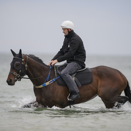 Winx-CaddenBen-10092016-4932 - WINX (Street Cry - Vegas Showgirl) visits the beach on Sunday 9 October 2016 after winning her 12th successive race, the...
