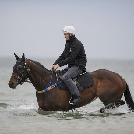 Winx-CaddenBen-10092016-4933 - WINX (Street Cry - Vegas Showgirl) visits the beach on Sunday 9 October 2016 after winning her 12th successive race, the...