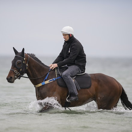 Winx-CaddenBen-10092016-4943 - WINX (Street Cry - Vegas Showgirl) visits the beach on Sunday 9 October 2016 after winning her 12th successive race, the...