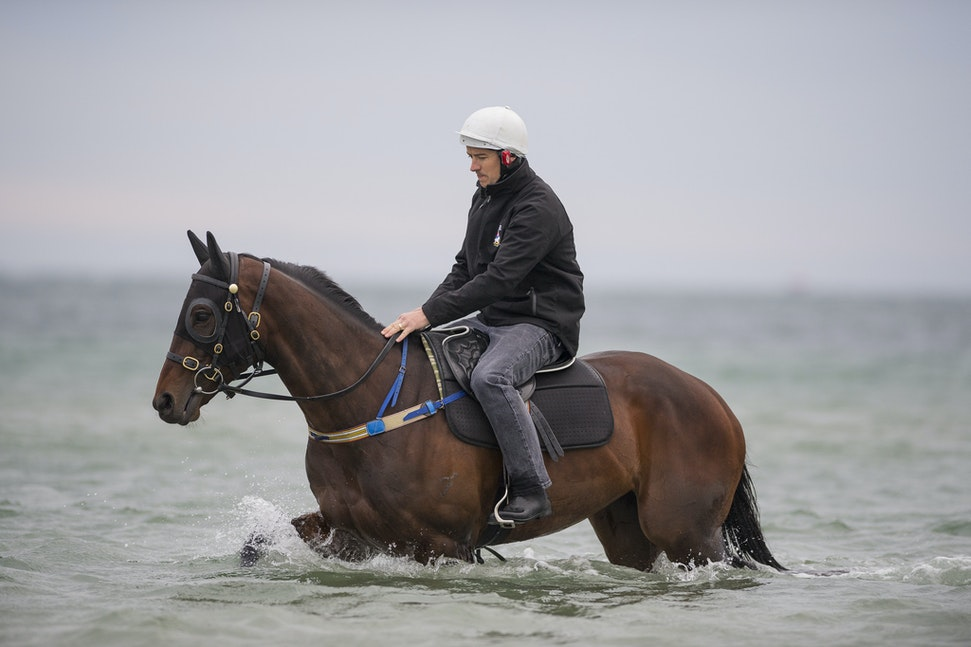 Winx-CaddenBen-10092016-4975 - WINX (Street Cry - Vegas Showgirl) visits the beach on Sunday 9 October 2016 after winning her 12th successive race, the...