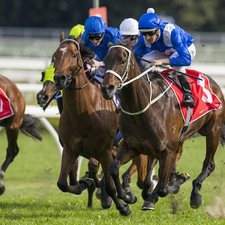 20160917-Winx-George Main Stakes - Winx winning the G1 George Main Stakes at Royal Randwick on 17 September 2016.
