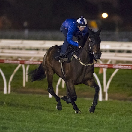 _BHP6725 - WINX (Street Cry - Vegas Showgirl) gallops at Caulfield Racecourse on Wednesday 5 October 2016 as her final preparation for Saturday's Caulfield...