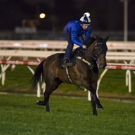 _BHP6727 - WINX (Street Cry - Vegas Showgirl) gallops at Caulfield Racecourse on Wednesday 5 October 2016 as her final preparation for Saturday's Caulfield...