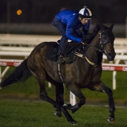 _BHP6735 - WINX (Street Cry - Vegas Showgirl) gallops at Caulfield Racecourse on Wednesday 5 October 2016 as her final preparation for Saturday's Caulfield...