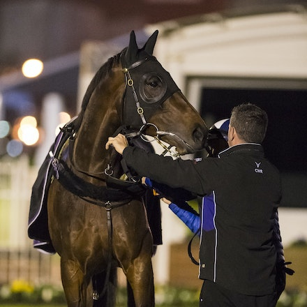 _BHP6897 - WINX (Street Cry - Vegas Showgirl) gallops at Caulfield Racecourse on Wednesday 5 October 2016 as her final preparation for Saturday's Caulfield...