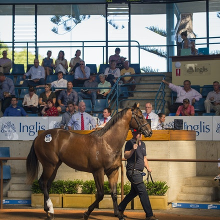 2016 Easter Day 2 - Day 2 of the 2016 Inglis Easter Yearling Sale.  Held on 6 April 2016.  The highlight of the day was LOT 285, the full brother to champion...