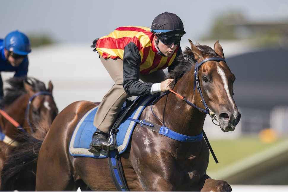 Showtime-BerryTommy-01172017-2474 - 2 year old colt SHOWTIME (Snitzel - Flidais) wins Heat 8 of the Official Trials at Rosehill Gardens Racecourse, held...