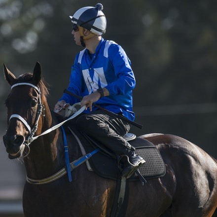 Winx-BowmanHugh-01172017-1797 - Champion racehorse WINX (Street Cry - Vegas Showgirl) runs in Heat 1 of the Official Trials at Rosehill Gardens Racecourse,...