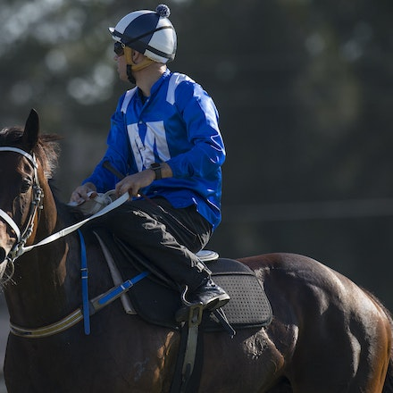 Winx-BowmanHugh-01172017-1799 - Champion racehorse WINX (Street Cry - Vegas Showgirl) runs in Heat 1 of the Official Trials at Rosehill Gardens Racecourse,...