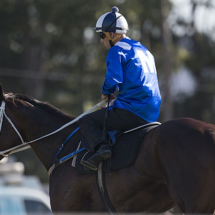 Winx-BowmanHugh-01172017-1821 - Champion racehorse WINX (Street Cry - Vegas Showgirl) runs in Heat 1 of the Official Trials at Rosehill Gardens Racecourse,...