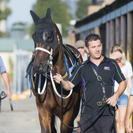 Winx-OdemisliogluUmut-01172017-1395 - Champion racehorse WINX (Street Cry - Vegas Showgirl) runs in Heat 1 of the Official Trials at Rosehill Gardens Racecourse,...