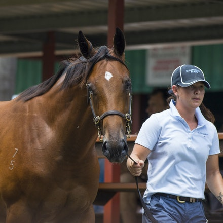 Lot268-Shamexpress-NewAgeRocka-01122017-4127 - Photo by Bronwen Healy.  The Image is Everything - Bronwen Healy and Darren Tindale Photography.