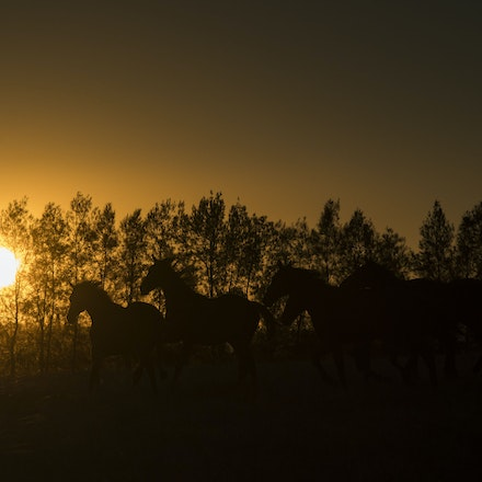 Yearlings-Sunset-11162016-4023 - at Arrowfield Stud.  Wednesday 16 November 2016. Photo - Bronwen Healy.  The Image is Everything - Bronwen Healy and Darren...