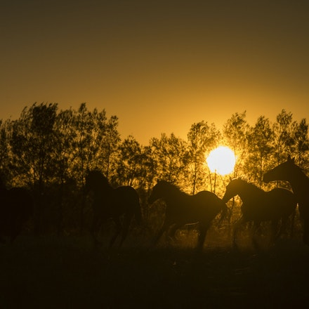 Yearlings-Sunset-11162016-4040 - at Arrowfield Stud.  Wednesday 16 November 2016. Photo - Bronwen Healy.  The Image is Everything - Bronwen Healy and Darren...