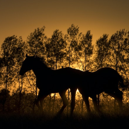 Yearlings-Sunset-11162016-4160 - at Arrowfield Stud.  Wednesday 16 November 2016. Photo - Bronwen Healy.  The Image is Everything - Bronwen Healy and Darren...