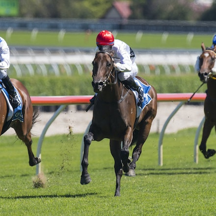 Frolic-BerryTommy-02132017-7441 - FROLIC (Husson - Leveller) wins the Inglis Classic (Restricted Listed) on Apollo Stakes Day.  Trained by Michael Freedman....